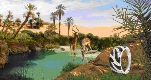 safari-500x267